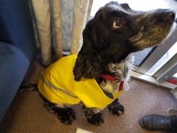 Hugo in his wet weather gear
